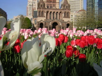 tulips and Trinity Church