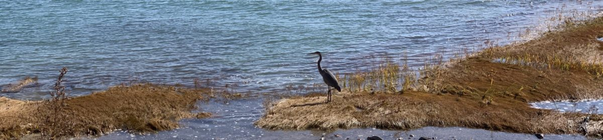 Jarrett House North